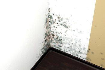 Mold Remediation/Removal